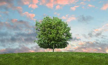شجرة CC0