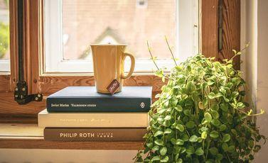 نباتات داخلية المنزل - أرشيفية CC0